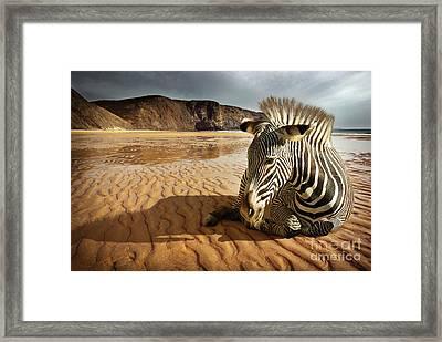 Beach Zebra Framed Print