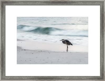 Beachbird Framed Print