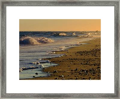 Beachcomber  Framed Print by Dianne Cowen