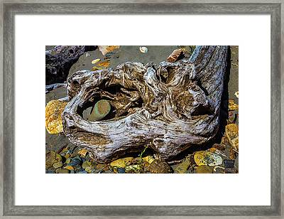 Beached Driftwood Framed Print by Garry Gay