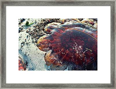 Beached Framed Print by Gregory Barger
