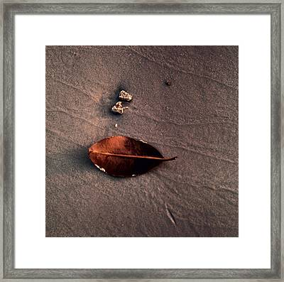 Framed Print featuring the photograph Beached Leaf by Brent L Ander