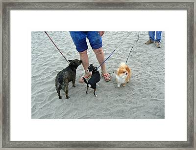 Beachen Toy Doggies Framed Print by Pamela Patch