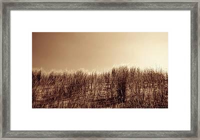 Beachgrass In Sepia Framed Print by Wim Lanclus