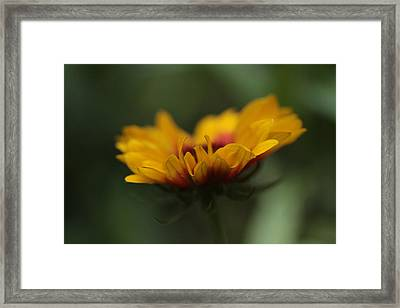 Beacon Framed Print by Connie Handscomb