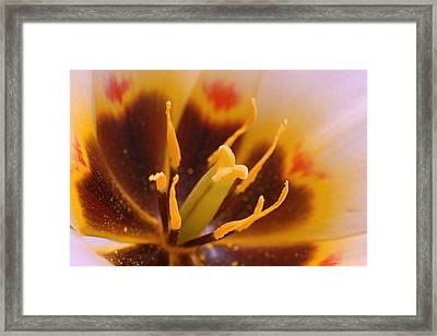 Beacuty Framed Print by Jacqueline Lewis