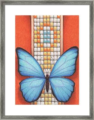 Beaded Morpho Framed Print by Amy S Turner