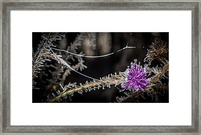 Beadwork Framed Print by Annette Berglund