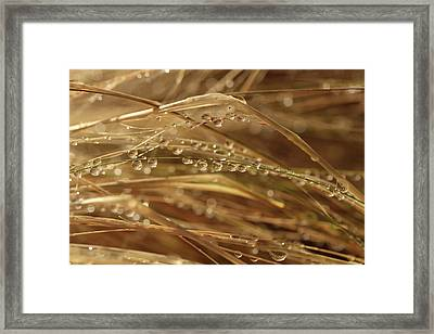 Beadwork Framed Print by Connie Handscomb