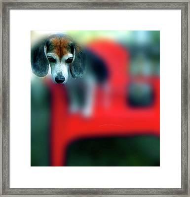 Beagle Beba Portrait Framed Print
