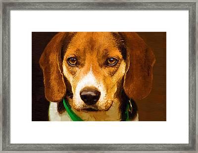 Beagle Hound Dog In Oil Framed Print by Kathy Clark