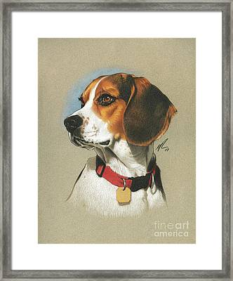 Beagle Framed Print by Marshall Robinson