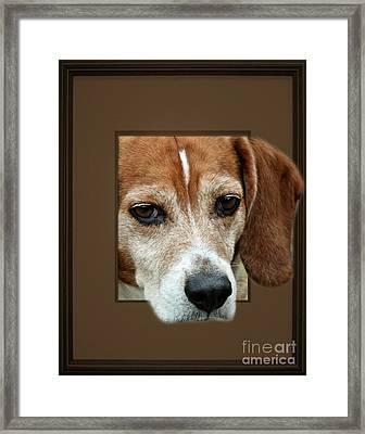 Beagle Peeking Out Framed Print