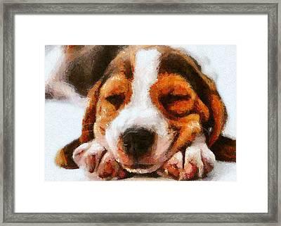 Beagle Puppy Framed Print