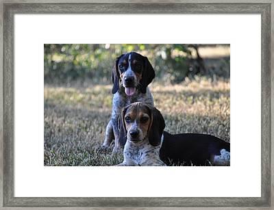 Beagles Framed Print by Tammy Price