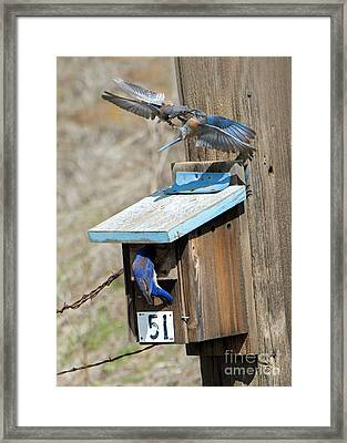 Framed Print featuring the photograph Beak To Beak by Mike Dawson