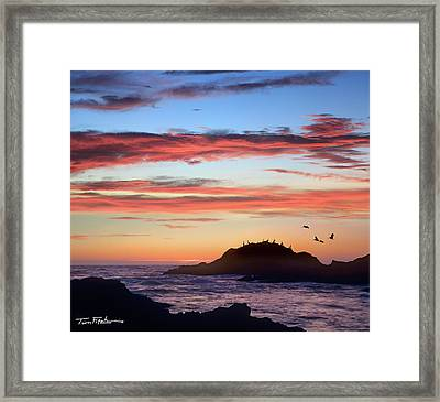 Bean Hollow Beach Framed Print by Tim Fitzharris