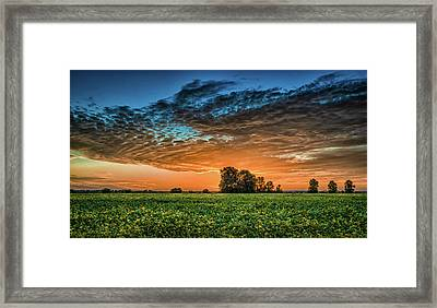 Beanfield Framed Print