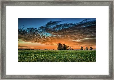 Beanfield Framed Print by James Barber
