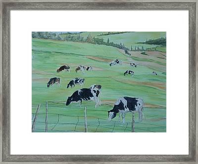 Beanie's Cows Framed Print by Joel Deutsch
