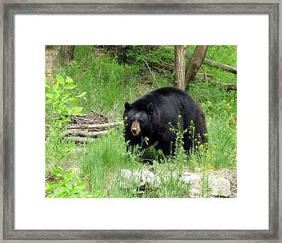 Bear 2 Framed Print by George Jones