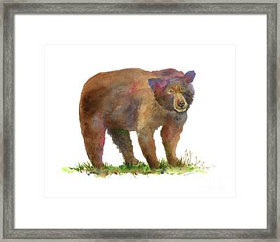 Bear Framed Print by Amy Kirkpatrick