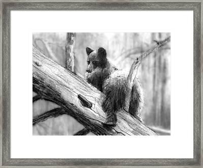 Bear Bottom Framed Print by Paul Sachtleben