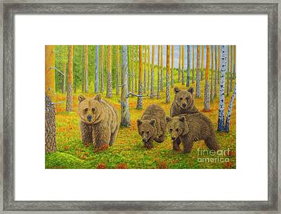 Bear Family Framed Print by Veikko Suikkanen