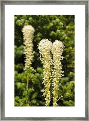 Bear Grass Framed Print by Bruce Gourley