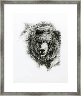 Bear Framed Print by Heather Theurer