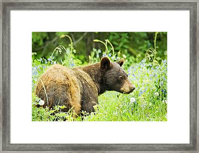 Bear In Flowers Framed Print