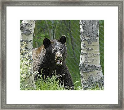 Bear In Yard Framed Print