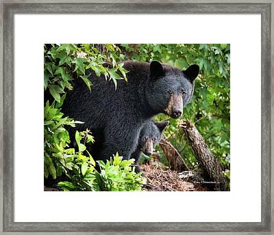 Bear Mom And Cub 9539 Framed Print by Dan Beauvais