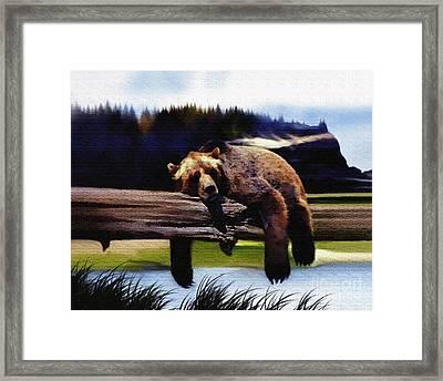 Bear Nap Framed Print by Robert Foster