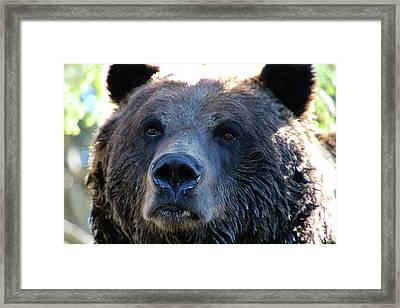 Bear On Grouse Framed Print