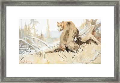 Bear  Framed Print by Celestial Images