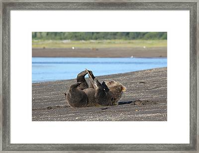 Bear Playing With Stick Framed Print by David Wilkinson