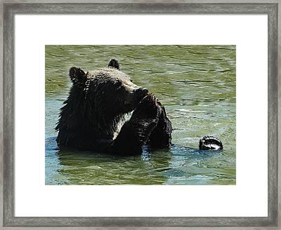Bear Prayer Framed Print
