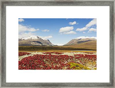 Bearberry Leaves In The Foreground Framed Print