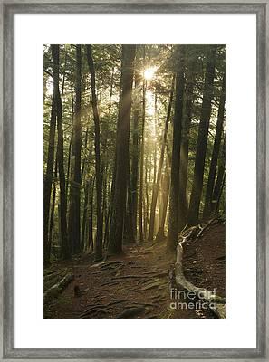 Bearcamp River Trail - Sandwich Notch New Hampshire  Framed Print by Erin Paul Donovan