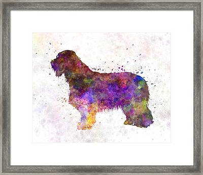 Bearded Collie 01 In Watercolor Framed Print by Pablo Romero