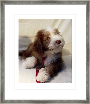 Bearded Collie 1529 Framed Print by Larry Matthews