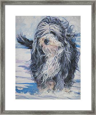 Bearded Collie In Snow Framed Print