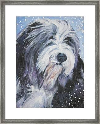 Bearded Collie In Snow Framed Print by Lee Ann Shepard