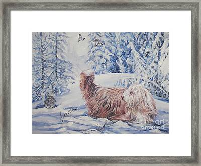 Bearded Collie In The Snow Framed Print by Lee Ann Shepard