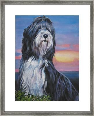Bearded Collie Sunset Framed Print by Lee Ann Shepard