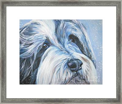 Bearded Collie Up Close In Snow Framed Print