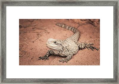 Bearded Dragon Lizard Framed Print
