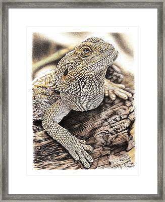Bearded Dragon Framed Print