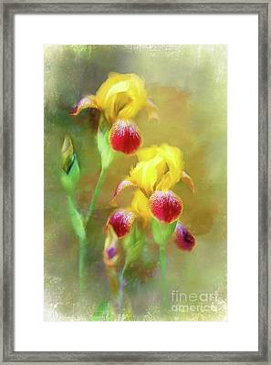 Bearded Iris Pair Framed Print